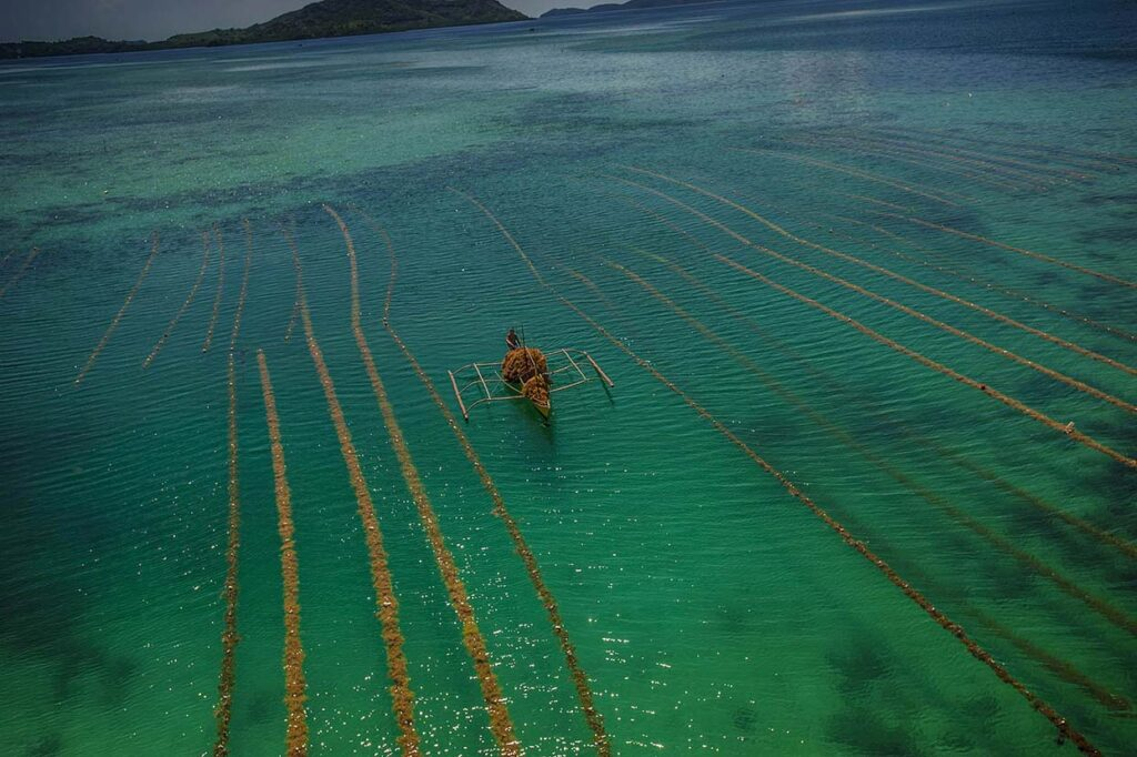 A local is collecting seaweed from his boat in TayTay Bay, Philippines.