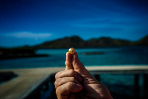 A golden pearl is the result of the farming efforts on Flower Island, Philippines.