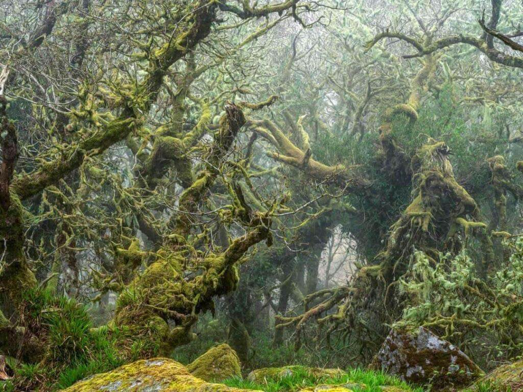 A misty forest in the South West of England