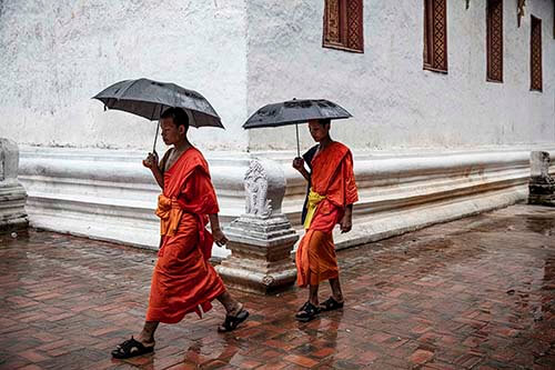 Two monks in orange robes walk in rain with umbrella in hand