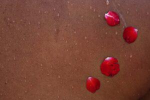 Four rose petals