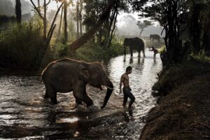 Thai Elepephant driver and his elephant by Steve McCurry