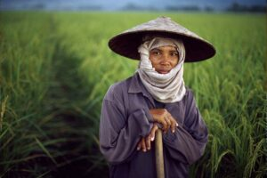 Thai farmer in rice field Thai Elepephant driver and his elephant by Steve McCurry
