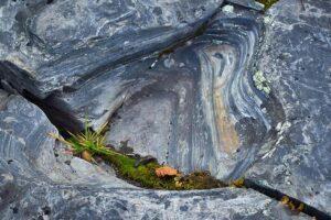 Ingemar Ljungdahl Abisko rock and leaves
