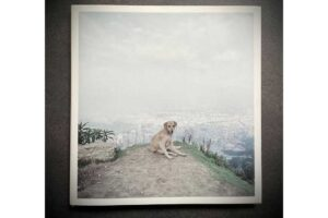 "Cover Alec Soth ""Dog Days Bogotá"""